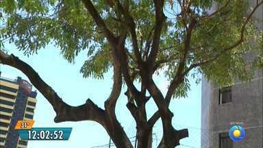 Moradores pedem ajuda e árvore é podada no bairro de Manaíra, em João Pessoa - Problema foi mostrado na semana passada no JPB1ª Edição.