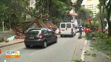Árvore cai em cima de banca de jornal em SP - Rua Maestro Cardim, na Bela Vista, está parcialmente interditada