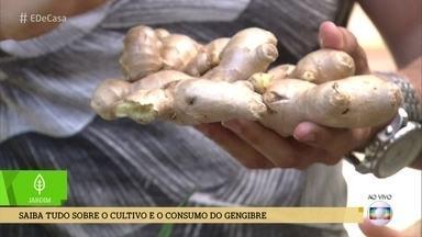 Saiba tudo sobre os benefícios e o cultivo de gengibre - A nutricionista Mariana Ferri e o engenheiro florestal Murilo Soares falam sobre o gengibre, que é o alimento queridinho do momento
