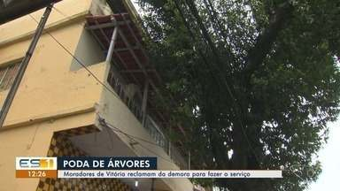 Moradores de Vitória reclama da demora na poda das árvores - A preocupação é por conta dos fios e telhas.