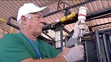 Vacinação contra a febre aftosa vai até 30 de novembro - Em Mato Grosso treze milhões e seiscentos mil animais de 0 a 24 meses de idade devem ser vacinados. Já os pecuaristas do baixo pantanal são obrigados a vacinar todo o rebanho de mamando a caducando, nesta etapa.