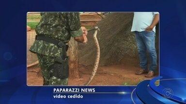 Jiboia é encontrada por moradores em praça de Castilho - Uma jiboia com mais de um metro e meio de comprimento foi encontrada em uma praça na região central de Castilho (SP), na manhã desta quinta-feira (8). O animal foi capturado pela Polícia Ambiental e solto em uma área rural da cidade.