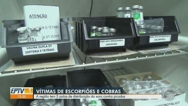 Região conta com cinco polos de distribuição de soros contra picada de cobra e escorpião - Casos recentes em Santa Bárbara D'Oeste e Amparo alertaram a população sobre como funciona a distribuição desses medicamentos.