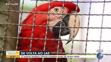 Araras resgatadas na Bahia vão ser levadas para os estados de Goiás e Tocantins - Aves traficadas foram tratadas antes de serem devolvidas à natureza.