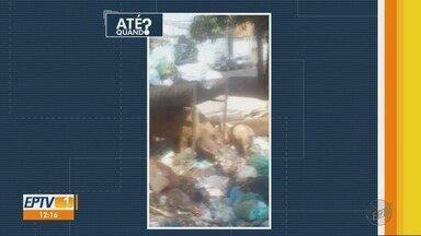 Lixo espalhado por espaços públicos é alvo de reclamação de moradores no Jardim Aeroporto - A sujeira atrai porcos que circulam por ruas do bairro e oferecem perigo para motoristas.
