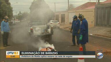 Prefeitura de Matão faz dedetização de baratas na rede de esgoto - Controle está sendo feito como medida preventiva para evitar escorpiões.