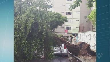 Temporal derruba árvores e provoca transtornos na região - Segundo bombeiros, incidentes não deixou feridos.