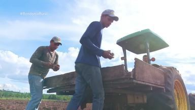 Safra de inhame deve ser 20% maior em Rondônia - Agricultores aproveitam a temporada de chuvas para plantar.