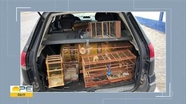 PM é preso por apreender pássaros ilegais e cobrar para não denunciar os donos - Com ele, foram encontradas nove gaiolas com passáros. Ele foi autuado em flagrante por corrupção passiva e passa por audiência de custódia nesta seguhnda (26). Ele estava na PM há 28 anos.