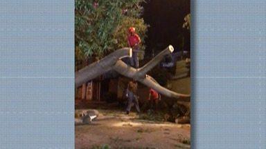 Chuva e vento causam estragos em Mogi das Cruzes - Queda de árvores foram numerosas na cidade.