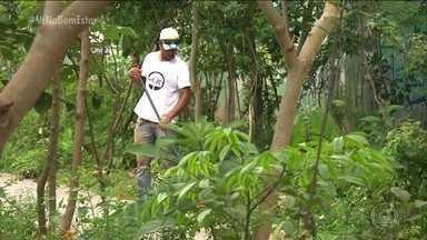 Grupo de voluntários planta árvores nativas em espaços públicos de SP - O nome é 'Floresta de Bolso', mas o efeito dessa prática é enorme, porque beneficia toda a comunidade.