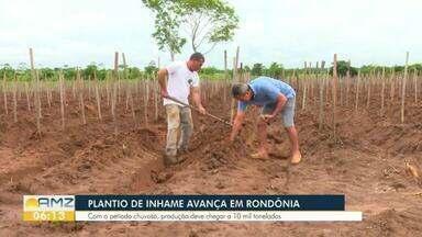 Com período chuvoso, plantio de inhame avança em Rondônia - Expectativa é de aumento de 20%, na safra deste ano, em relação ao ano anterior.