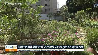 Moradores do bairro do Itaigara transformam terrenos em hortas solidárias - As hortaliças colhidas no local são doadas para abrigos de idosos da capital baiana.