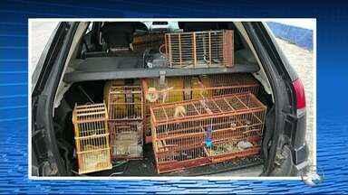 PM é preso por apreender pássaros em casas e pedir dinheiro para não denunciar donos em PE - Segundo a polícia, cabo se passava por integrante da Companhia do Meio Ambiente e se apresentava fardado e com colete. PM foi autuado por corrupção passiva, em Limoeiro.