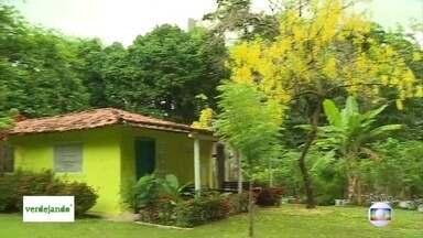 Projeto Verdejando:veja quais os cuidados necessários para plantar árvores - Espécie e local em que o morador vai plantar devem ser observadas antes da compra. Na Sementeira do Recife, em Casa Amarelo, há mudas de vários tipos para vender.