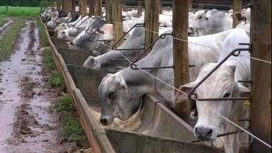 Aprenda a formular ração para rebanho confinado - Especialista sugere receita para gado na etapa final de confinamento.