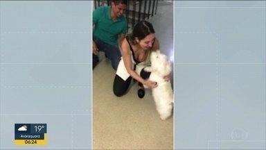 Família recupera cachorrinha levada em assalto - Animal de estimação foi encontrado um mês depois.
