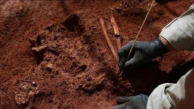 Arqueólogos encontram ossadas enterradas nos séculos XVIII e XIX em cemitério no centro - Os pesquisadores identificaram pelo menos sete esqueletos enterrados um metro e mio abaixo do nível da rua. As ossadas foram descobertas durante uma obra. Depois de análises, concluiram que os ossos são da época da escravidão.