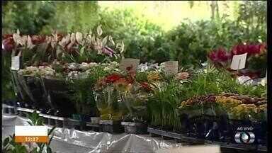 Centro de Palmas recebe exposição de plantas - Centro de Palmas recebe exposição de plantas