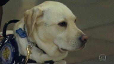 Conheça centro onde cão de Bush, que chamou atenção do mundo em seu velório, foi treinado - Sully passou os últimos seis meses com o ex-presidente americano. Ele pode atender o telefone, buscar coisas, abrir e fechar portas. Agora ele vai ajudar outra família.