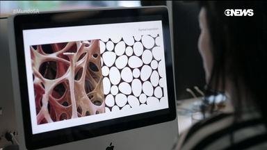 Biomimética – um mundo inspirado na natureza