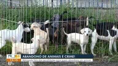 Advogada fala sobre penalidades para quem abandona um animal - CCZ de Resende registrou aumento de 20% no número de animais deixados nas ruas da cidade.