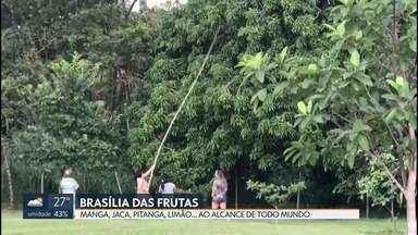 Brasília é considerada um pomar a céu aberto - Temos cinco milhões de árvores. Muitas delas frutíferas. Manga, jaca, limão... tudo à disposição, pra quem quiser.