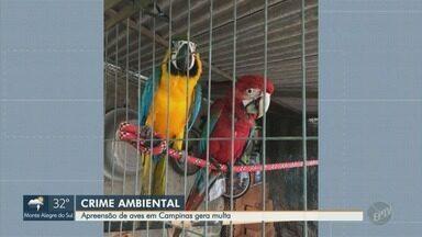 Polícia Ambiental apreende mais de 20 pássaros silvestres em duas residências de Campinas - Dois locais pertencem à mesma família. Responsáveis receberam multas de R$ 34 mil.