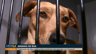 Castrações de animais de rua devem continuar em 2019 em Cascavel - No primeiro semestre de 208, quase dois mil animais, entre cães e gatos, foram castrados na cidade.