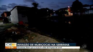Invasão de muriçocas na Serrinha. Moradores querem limpeza do canal - Confira outras notícias no g1.globo/ce
