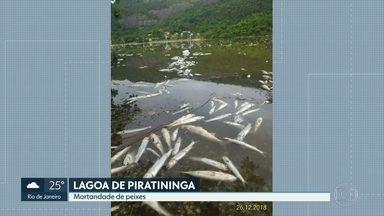Moradores de Piratininga, em Niterói, denunciam mortandade de peixes na lagoa - Técnicos da Prefeitura de Niterói foram ao local para averiguar a situação e coletar amostras.