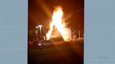 Dois adolescentes são apreendidos suspeitos de por fogo em árvore de natal em Maringá - A árvore de natal ficava ao lado da Catedral e tinha aproximadamente 17 metros de altura.