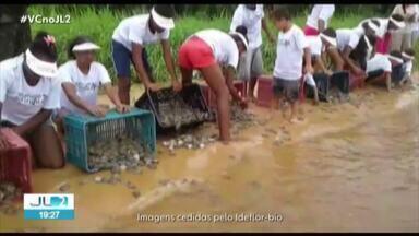 Mais de 300 mil tartarugas e tracajás já nasceram no sudeste do Pará neste mês - A expectativa é que, até o fim do período, cerca de 500 mil animais ganhem os rios da região.