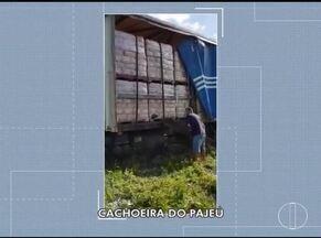 PC recupera carga roubada de café e caminhão avaliados em R$ 200 mil em Cachoeira do Pajeú - Roubo do veículo aconteceu no dia 31 de dezembro, após roda ter quebrado na BR-251; PC encontrou caminhão e carga escondidos em matagal.