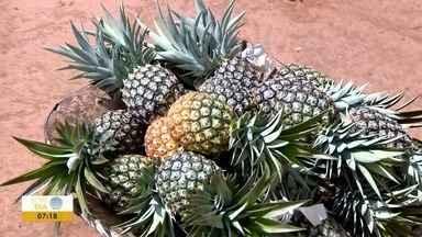 Produtores de abacaxi comemoram resultados da segunda colheita - Produção deve ser suficiente para atender a demanda até mês que vem.