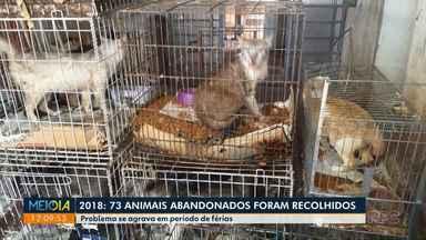 Diretoria de Bem-Estar Animal recolheu 73 animais abandonados em 2018 - As situações de abandono pioram no período de férias.