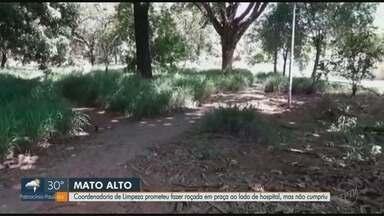Coordenadoria de Limpeza descumpre promessa de roçada em praça em Ribeirão Preto - Área fica ao lado de hospital.