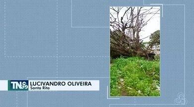 Tô na Rede: árvore caída há mais de 1 Mês obstrui calçada na Avenida Padre Júlio, no AP - Internauta registrou pelo aplicativo da Rede Amazônica.