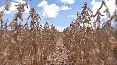 Lavouras do sudeste também sofreram como veranico - A falta de chuva também prejudicou o desenvolvimento das lavouras e a produção está sendo menor do que o planejado pelos produtores.