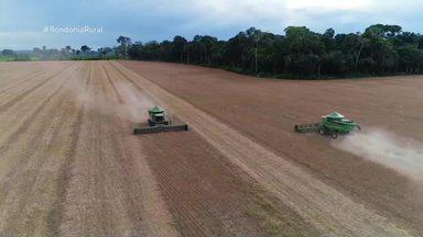 Colheita de soja começa em Rondônia e expectativa é de alta produtividade - Insumos ficaram mais caros, mas produtores não desanimam.