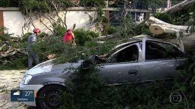 Temporal castiga região da Vila Mariana - Alguns moradores ainda estão sem energia elétrica. A queda de árvores também causou transtornos.