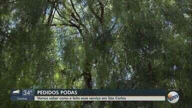 Saiba como é feito o pedido de poda de árvore nas cidades da região - Após solicitação, vistoria de técnicos deve analisar a necessidade de realizar o corte da vegetação.