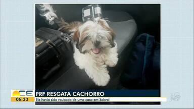 Cachorro levado em roubo é resgatado pela Polícia Rodoviária Federal - O carro dos assaltantes foi parado em São Gonçalo do Amarante, região metropolitana.