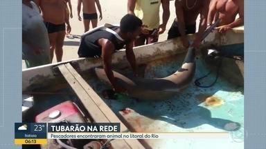 Tubarão é capturado no litoral carioca - O animal foi levado pelos pescadores para a Colônia do Posto 6, em Copacabana. Trata-se de uma fêmea Galha Preta, adulta. A espécie é comum no nosso litoral, segundo o biólogo Marcelo Szpilman.