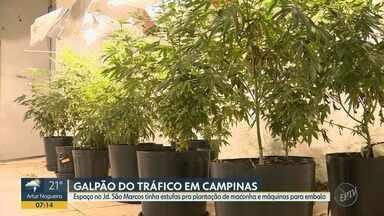 Galpão no Jd. São Marcos, em Campinas, tinha estufa para plantação de maconha - A Polícia Militar descobriu um galpão no Jd. São Marcos, em Campinas, que era usado para tráfico de drogas.