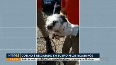 Coelho é resgatado em bueiro na zona norte de Maringá - Corpo de Bombeiros resgatou o animal no Parque das Bandeiras.