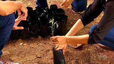 Produtor rural descobre nos pés de cajá forma de recuperação das áreas degradadas no TO - Produtor rural descobre nos pés de cajá forma de recuperação das áreas degradadas no TO