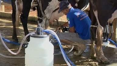 Produção de leite aumenta no Sul do ES - O resultado é por conta de um clima favorável e do bom manejo no campo.