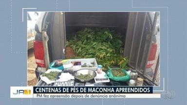 Polícia encontra mais de 300 pés de maconha em chácara de Luziânia - Três homens que estavam no local foram presos suspeitos de tráfico de drogas. Também foram encontradas sementes e balança de precisão.