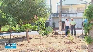 Moradores plantam árvores frutíferas em bairros de Ribeirão Preto, SP - Iniciativa propõe espalhar a ideia para a cidade toda.